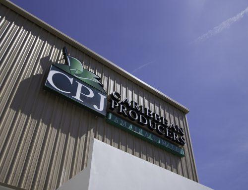 Unregulated sellers disrupt market — CPJ
